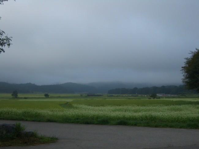 大町の蕎麦畑