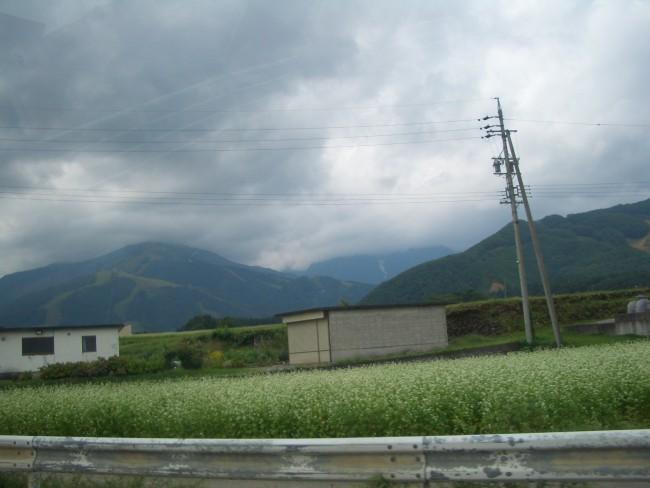 北アルプスと蕎麦畑