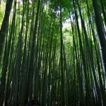 ジャパンビューティ!ミシュラン3つ星の鎌倉・報国寺の『緑』に萌える