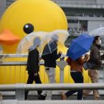 巨人じゃないよ♪大阪中之島公園バラ園にラバーダックが帰ってくる!