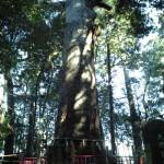 不老長寿の大杉と心和む田園風景  佐倉惣五郎の故郷・千葉県成田市をゆく