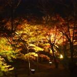 季節限定!!春や秋に行ってみたい京都の穴場観光スポット!!