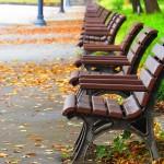 外国人も楽しむ観光地!皇居外苑で深まる秋を楽しみましょう
