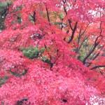 一般公開は年2回だけ!東京駅銀杏並木から皇居乾通りで典雅な紅葉観賞