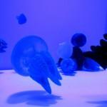 青森市「浅虫水族館」は東北最大級!青森の海「海底トンネル」とユニークなショー