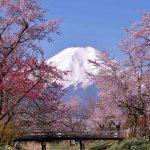 神秘的な美しさに絶句!!忍野八海の桜は今、満開です。