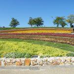 まほろばの大和は花と古墳が満載!奈良県立馬見丘陵公園