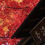 知られざる紅葉の裏名所、川越「中院」は歴史の宝庫