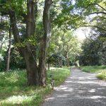 リレー徘徊34:京の庭・京都御苑3/ 苑内巡る編(上京区)