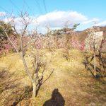 大阪・河南町で美しい自然と歴史が堪能できる!近つ飛鳥風土記の丘