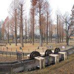 冬の北綾瀬・しょうぶ沼から葛西用水親水公園 東京都足立区を歩く