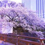 東京に着いたら桜を眺めながらホテルで朝食を。都内のお花見できるホテル4選
