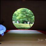 見頃は6月!北鎌倉の明月院で紫陽花を愛でる